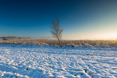 Landscape with winter field under snow at sunrise Royalty Free Stock Photo