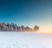 Landscape with winter field under snow at sunrise Royalty Free Stock Image
