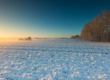 Landscape with winter field under snow at sunset Royalty Free Stock Image