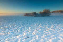 Landscape with winter field under snow at sunset Stock Images