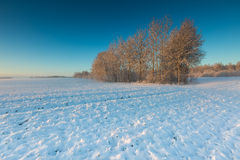 Landscape with winter field under snow at sunset Stock Photo