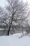 Landscape winter forest. Winter in a beautiful dense forest Royalty Free Stock Images