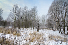 Landscape winter forest. Winter in a beautiful dense forest Stock Image