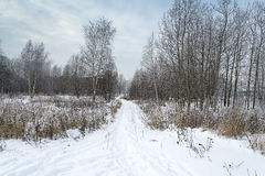 Landscape winter forest. Winter in a beautiful dense forest Royalty Free Stock Photo