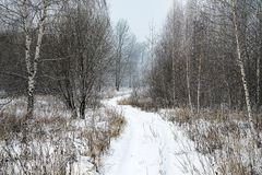 Landscape winter forest. Winter in a beautiful dense forest Stock Photos