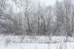 Landscape winter forest. Winter in a beautiful dense forest Stock Images