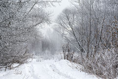Landscape winter forest. Winter in a beautiful dense forest Stock Photo