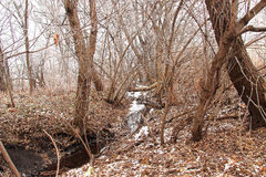 Landscape With Winter Forest. And creek through the trees Stock Photos