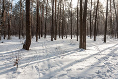 Landscape of the winter forest. Stock Photos