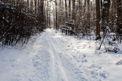 Landscape of the winter forest. Royalty Free Stock Photography