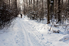 Landscape of the winter forest. Royalty Free Stock Photos