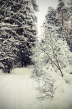 Landscape of winter forest. Stock Photos