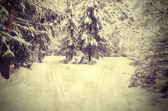 Landscape of winter forest. Royalty Free Stock Images