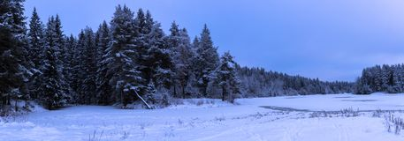 Landscape of the winter forest Stock Image
