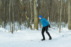 Landscape of the winter forest with a running skier. Stock Image