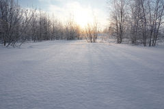 Landscape. winter forest Royalty Free Stock Photo