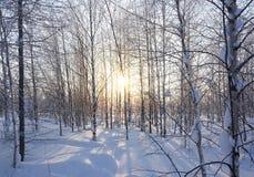 Landscape. winter forest Stock Photo