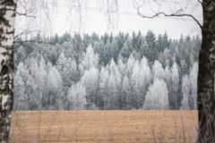 Landscape in winter, frozen trees in the distance. Birch in the frame. Real winter in December stock images