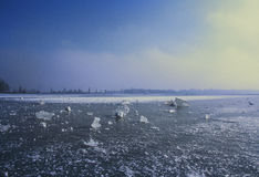 Landscape winter image of a frozen lake. Royalty Free Stock Photography
