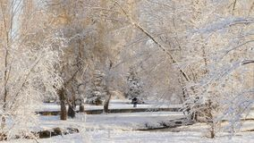 In the snow-covered park, behind the trees, two people met. Landscape of a winter park with a river. On the opposite bank of the river there are two people meet stock video footage