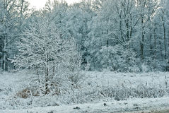 Landscape in winter. A landscape with rime, frost and snow on trees in winter Royalty Free Stock Photos
