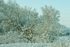 Landscape in winter. A landscape with rime, frost and snow on trees in winter Stock Photography