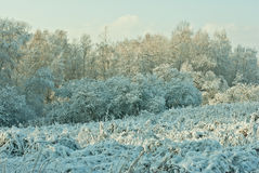 Landscape in winter. A landscape with rime, frost and snow on trees in winter Stock Images