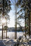 Landscape with winter sunny forest. Royalty Free Stock Image