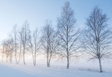 Landscape in winter Royalty Free Stock Image