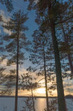 Landscape of a winter sunset with pine trees over a frozen lake Royalty Free Stock Photos