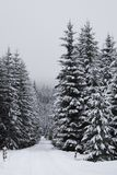 Winter wonderland. Landscape of winter wonderland with snow on trees Royalty Free Stock Photography