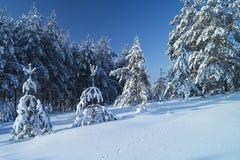 Landscape in winter wood. Beautiful winter landscape in wood on background blue sky Stock Photo