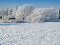 Landscape in winterwith  Trees covered with snow Royalty Free Stock Image