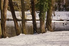 Landscape wintry, a forest with some snow. In background there is a lake with an icy water. It is in the day, by clear time, there is of the sun. There is no Royalty Free Stock Photography