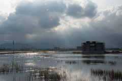 Landscape With A Swamp Stock Photography