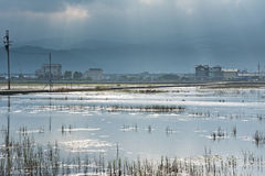 Landscape With A Swamp Royalty Free Stock Photo