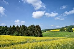 Landscape With Big Rapeseed Field Stock Photography
