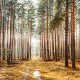 Landscape With Country Road In Autumn Foggy Forest Royalty Free Stock Photography