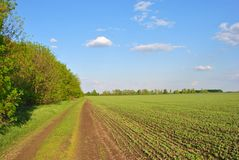 Free Landscape With Green Winter Wheat Field And Road Along Trees Line, Blue Cloudy Sky On Horizon Stock Photo - 158971200