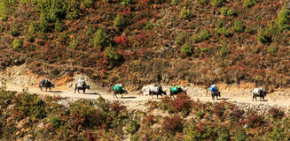 Landscape With High Mountains And Oxen Caravan In Himalaya Royalty Free Stock Photos