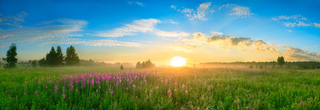 Free Landscape With The Sunrise, A Blossoming Meadow Panorama Royalty Free Stock Photos - 43101868