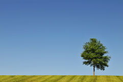 Landscape With Tree And Blue Sky Royalty Free Stock Photography