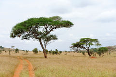Free Landscape With Tree In Africa Royalty Free Stock Photography - 60681507