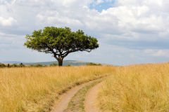 Free Landscape With Tree In Africa Royalty Free Stock Images - 62432599