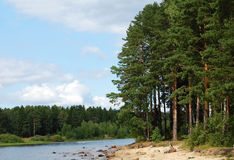 Landscape With Trees Royalty Free Stock Photo