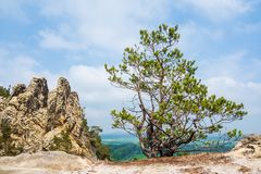 Landscape With Trees In The Harz Area, Germany Stock Photography