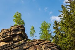 Landscape With Trees In The Harz Area, Germany Royalty Free Stock Photography