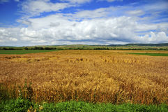 Free Landscape With Wheat Stock Photos - 10269713