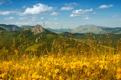 Landscape With Yellow Flowers And Blue Sky Royalty Free Stock Images