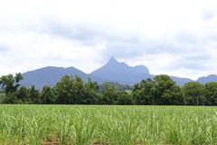 Landscape with volcano Mount Warning, New South Wales, Australia. Landscape in Wollumbin National Park and a view at Mount Warning, New South Wales, Australia Stock Images
